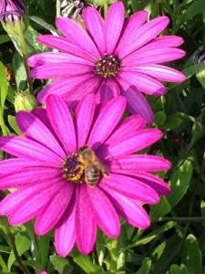 abejaen flor