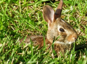 rabbit-1405705499jkuf3