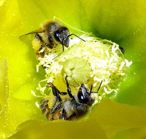 640px-Creation-Via-Pollination-wikipedia