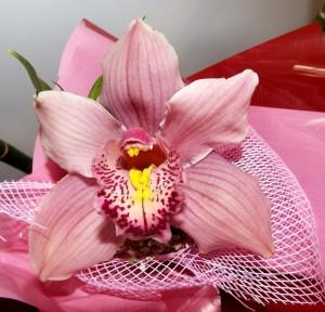 orchid01-1397660962qtgwr