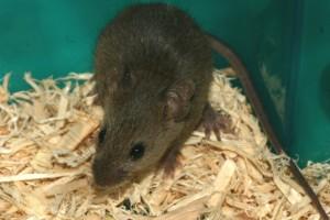 mice-file0001431568713