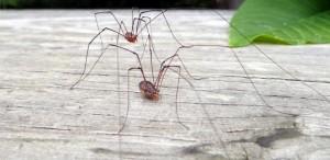 spider-1413792714cx5ia