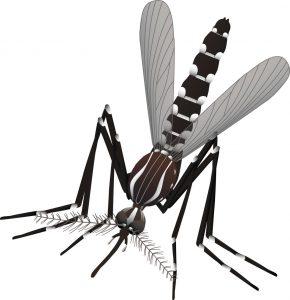Aedes_aegypti-1-Jose-Luis-Ordóñez-CC-BY-NC