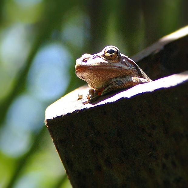 frog-file9921266813876
