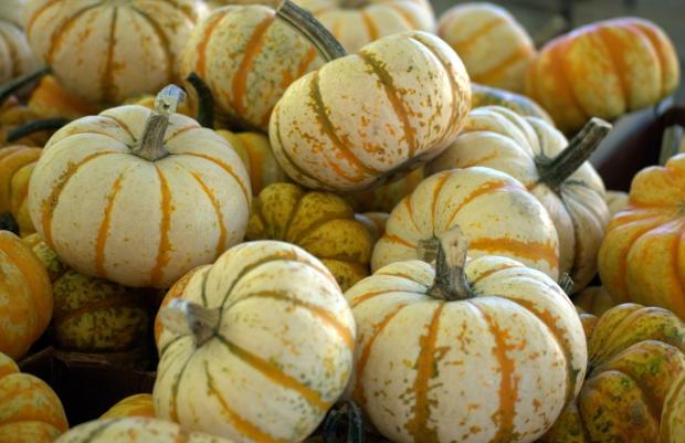 pumpkin1-14428688245ylyt